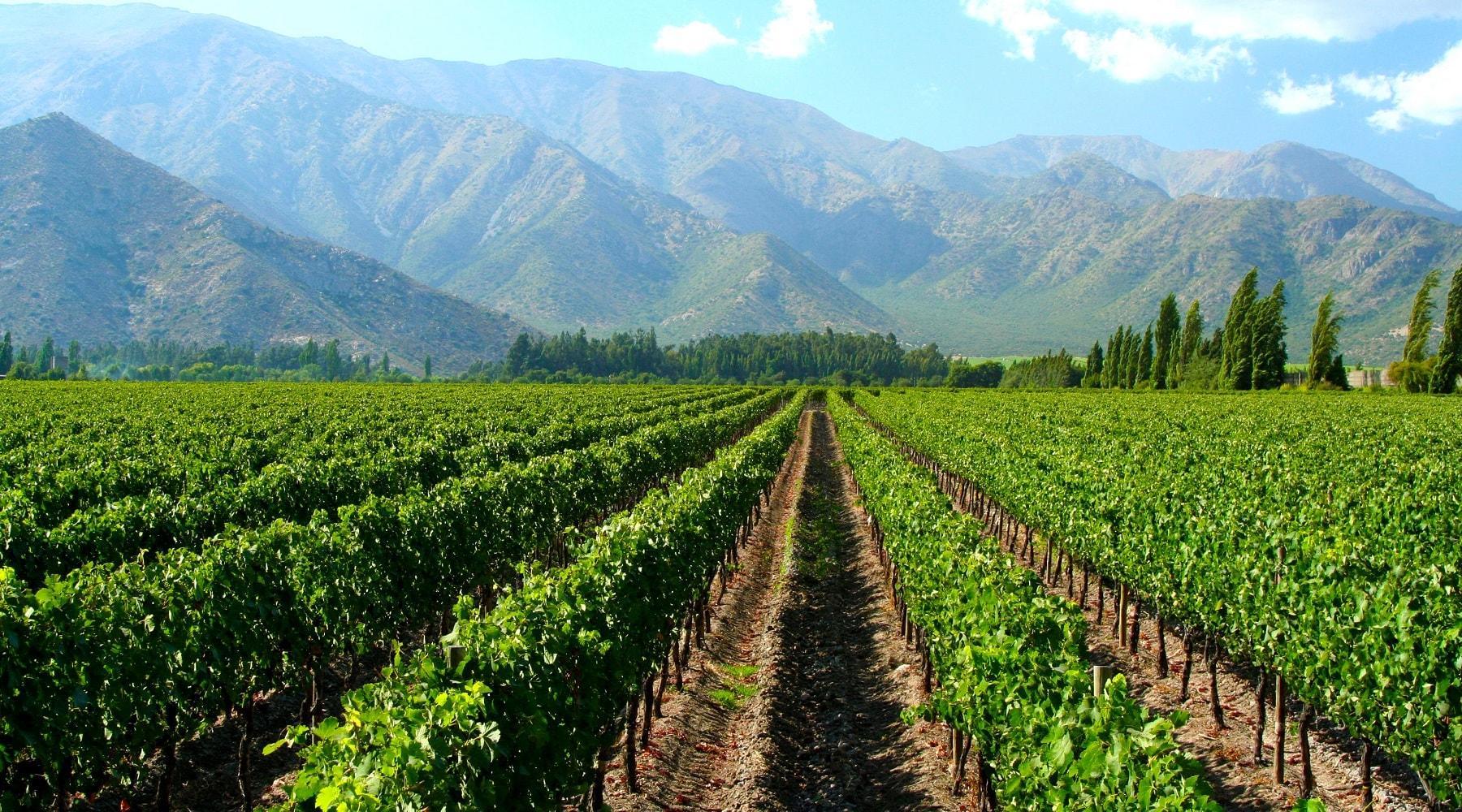Création De Site Pour Vignobles, Vins & Spiritueux